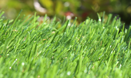 Buy Synthetic Grass
